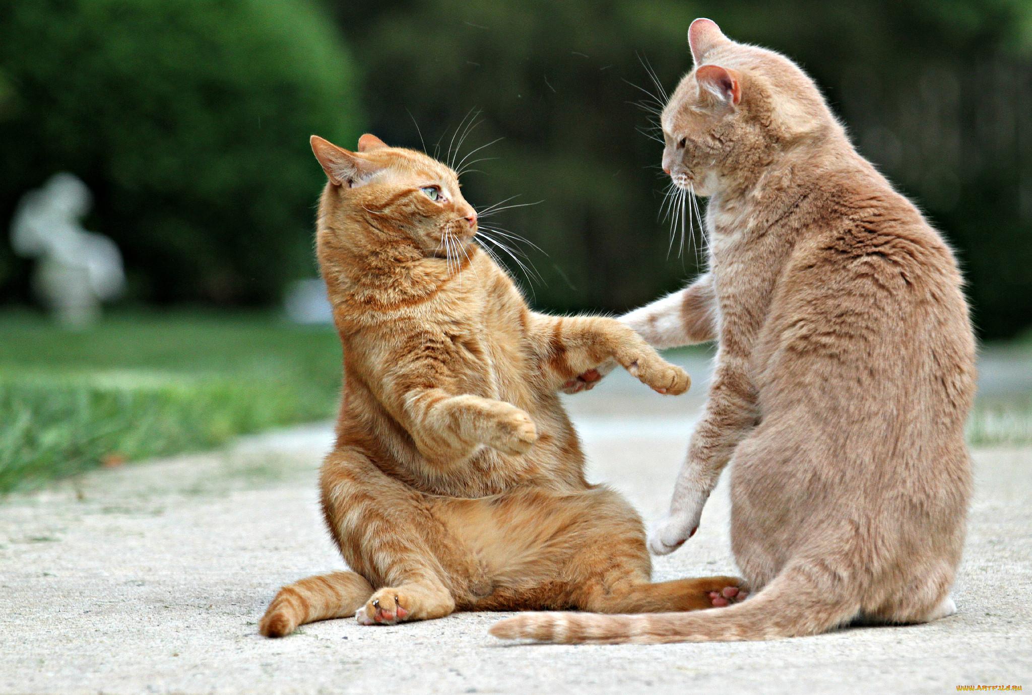 нет картинки где котики дружат разделе представлены
